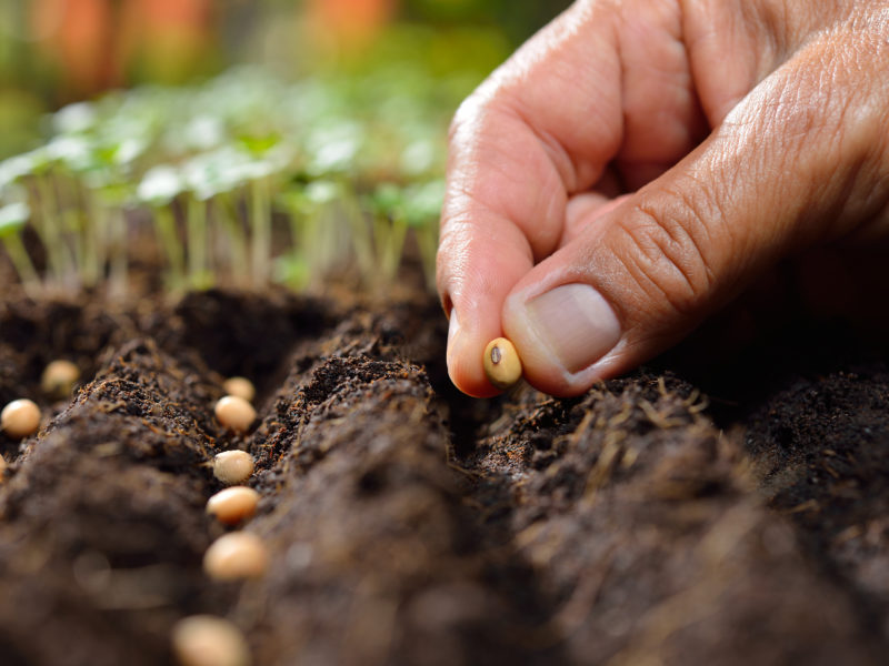 God Created Us All to be Farmers: It's Time to Start Sowing With Expectation
