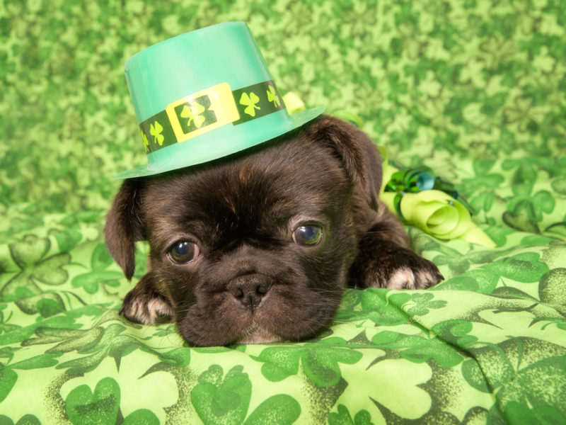 St Patrick's Day is not just about getting drunk!