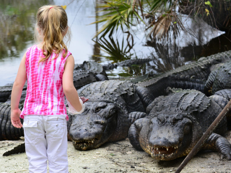 A Miraculous Escape: 10-Year-Old Girl Pries Open The Clenched Jaws of an Alligator