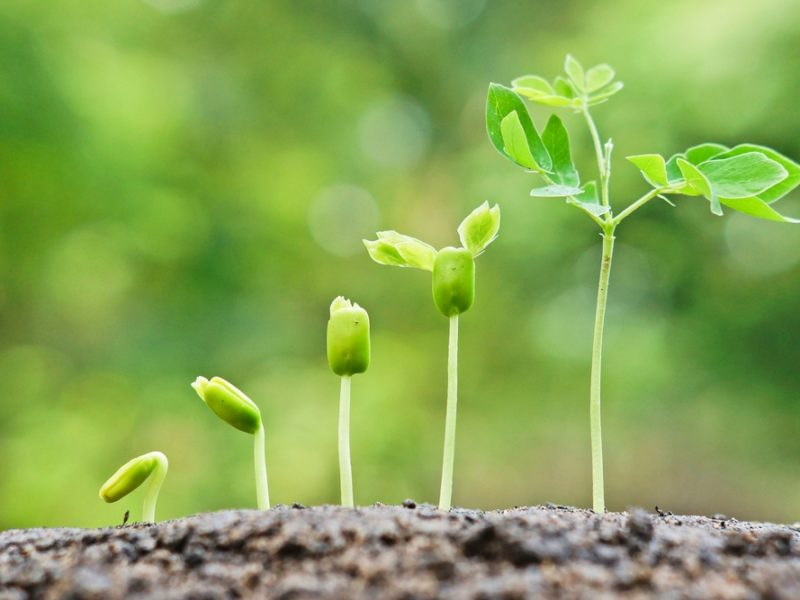 Christians in Business: How to Grow Where You Are Planted