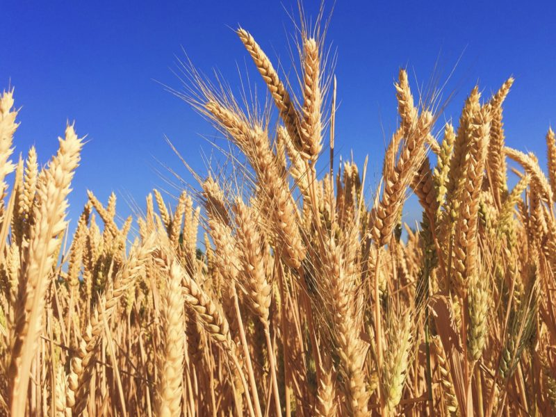 Daily Devotional: It's Time To Harvest.