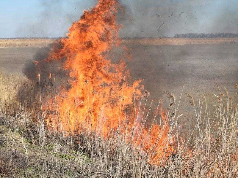 Hamas Threatens Israel With Thousands Of Burning Kites
