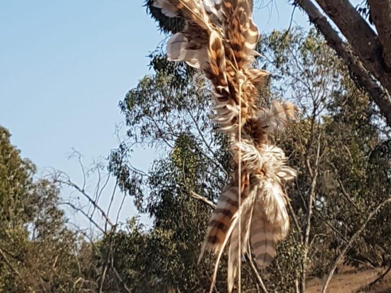 Latest Palestinian Invention: Arson Birds?