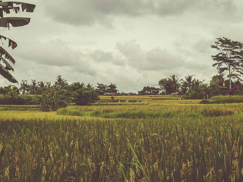 God Miraculously Protected The Ricefield Of The Missionaries Amidst The Storm