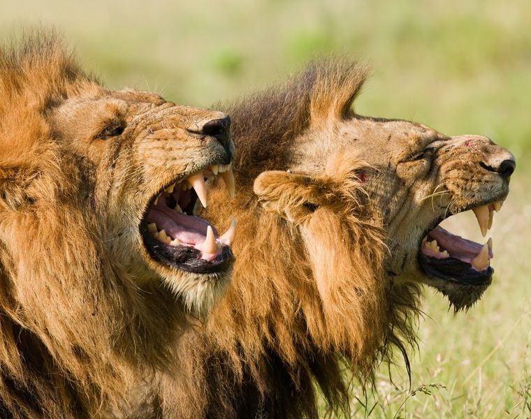 Miracle Intervention: Lions Save Christians from Islamic Militants