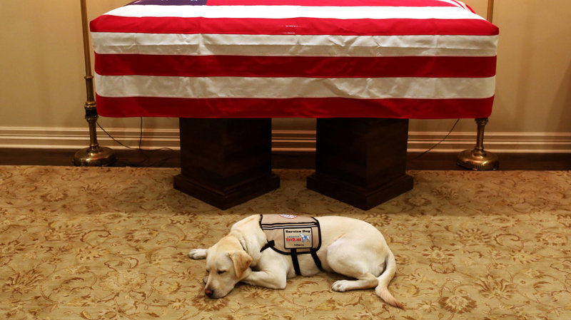 George H.W. Bush's Service Dog Stays By His Side Till the End