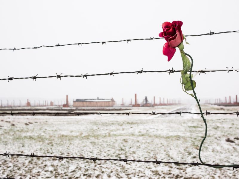 Just As Roses Bloom In The Desert In Israel, So There Was Life After The Death Camps