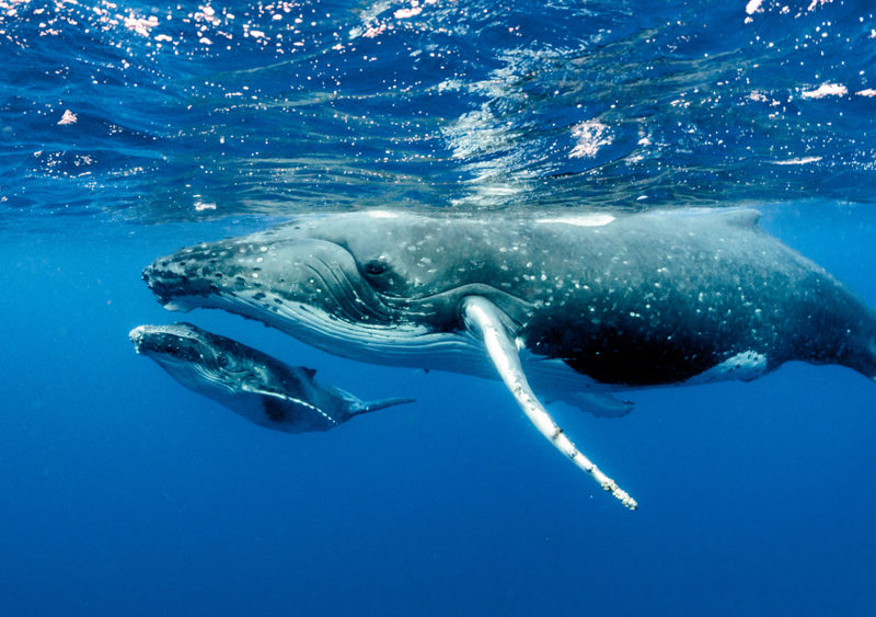 A Whale Of A Dilemma