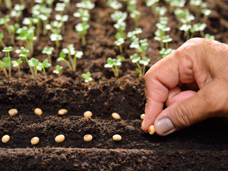 Sowing Seed God Tv