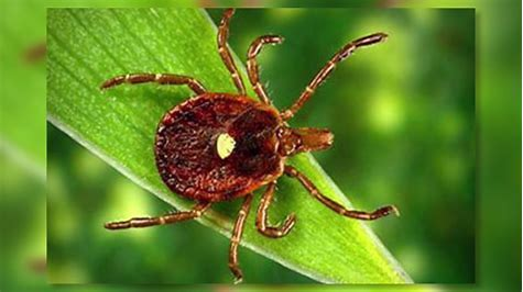 A Tick Called Bitterness. How You Can Expose It