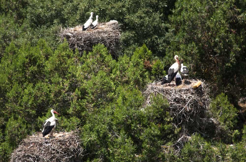storks live in community
