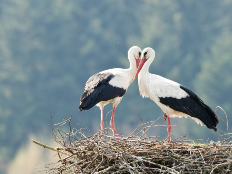 Storks In The Sky – What Can We Learn From Them?