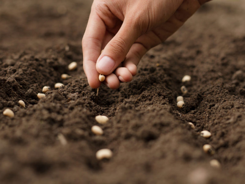 What Do You Sow In This Life?
