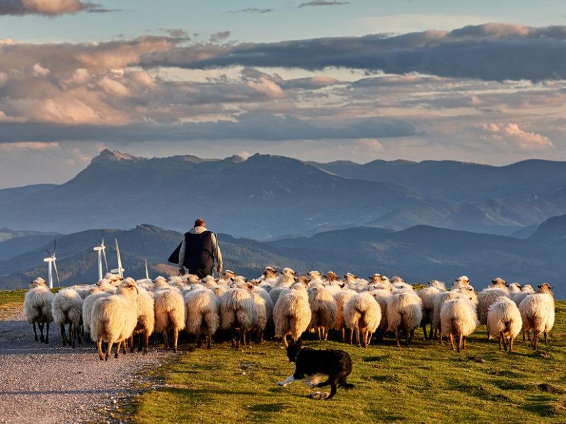 Good Shepherd: The Strength Of The Sheep