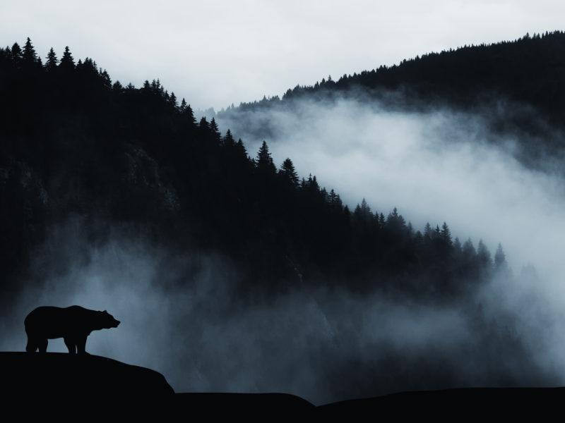 The Roar In The Wilderness