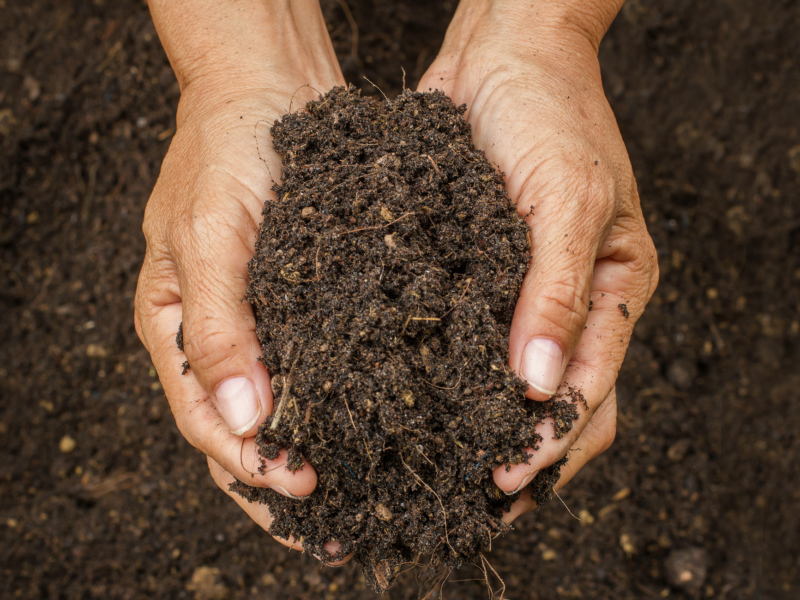 The Wayside Soil And OCD: How Are They Related?