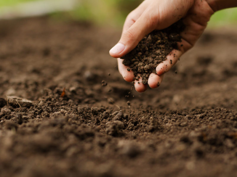 Soil And Rocks In The Heart, Fostering The Good Not The Mean