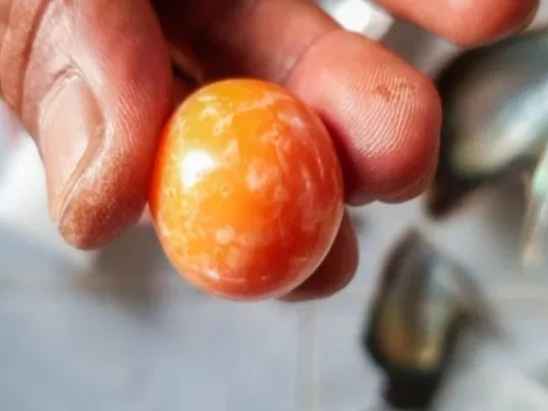 Struggling Fisherman Accidentally Discovers Rare Melo Pearl Worth $320,000