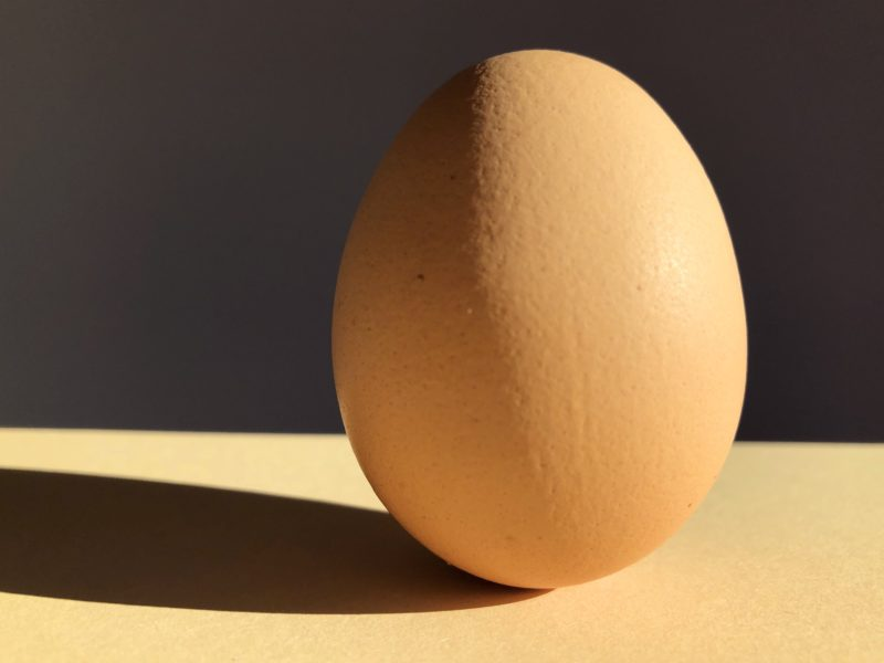 Israeli Archeologists Recover Rare Intact 1,000-year-old Chicken Egg
