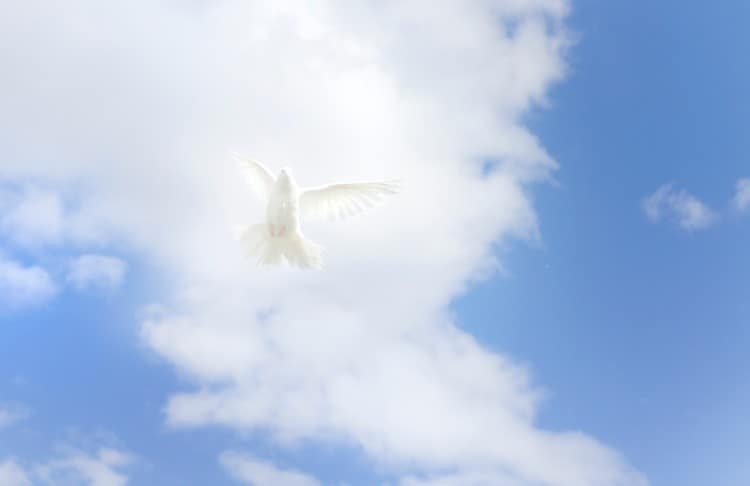 Honour The Holy Spirit As Your Intimate Partner