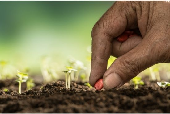 God Is Answering Our Prayers By Giving Us Seeds